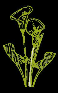 biodanza flores