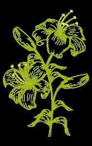 Florecer con Biodanza